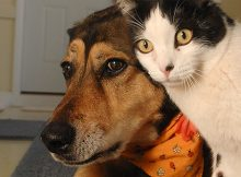 Karies Gigi Pada Anjing dan Kucing. Mengapa?